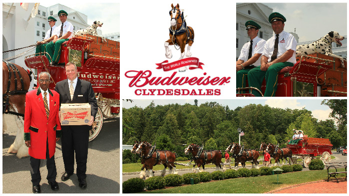2012 Budweiser Clydesdales at The Greenbrier Classic
